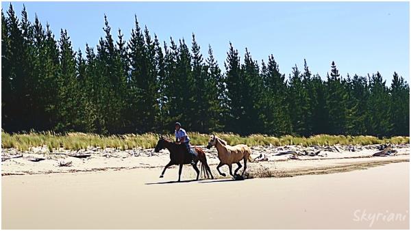 Beach Jockey II