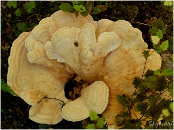 Golden Fungus