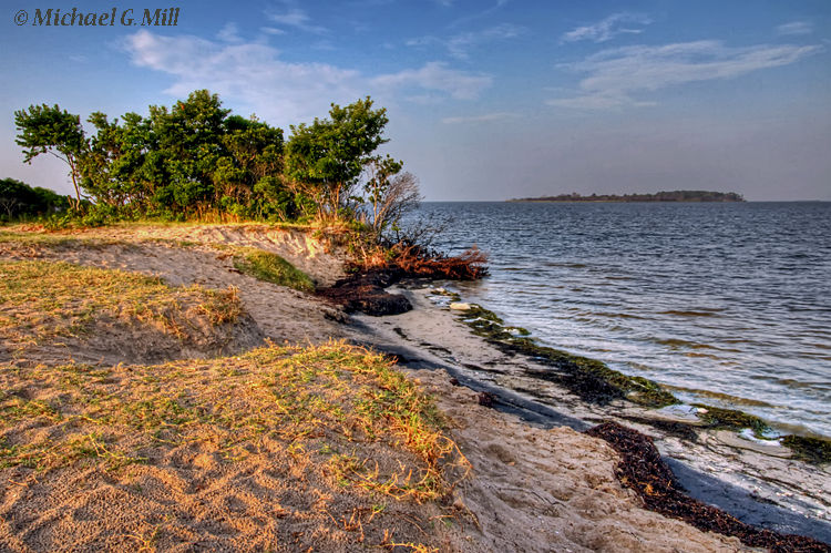 A view from the shore of Assateague Island.