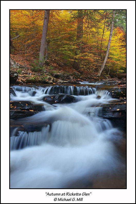 Autumn At Ricketts Glen