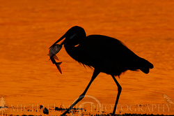GBH Breakfast Silhouette