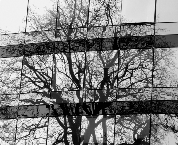 reflection, tree