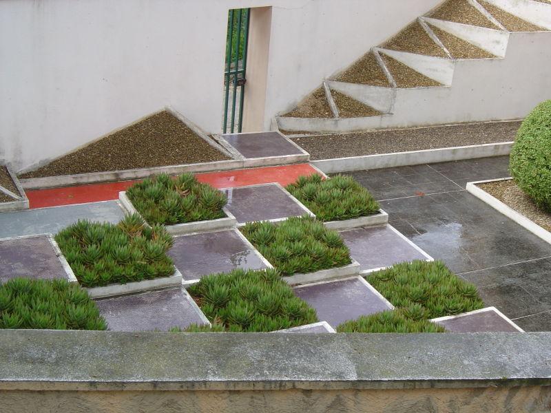 Jardin Cubiste Plant Nature Photos Cheminement