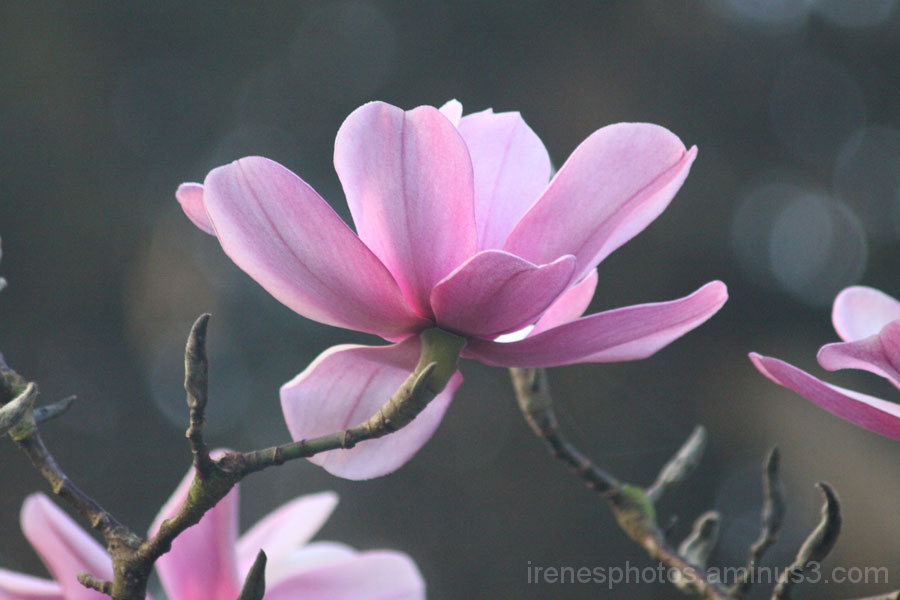 Magnolia #1 of  2 on 02/28/13