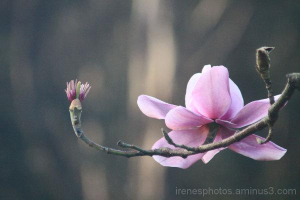 Magnolia #2 of  2 on 02/28/13