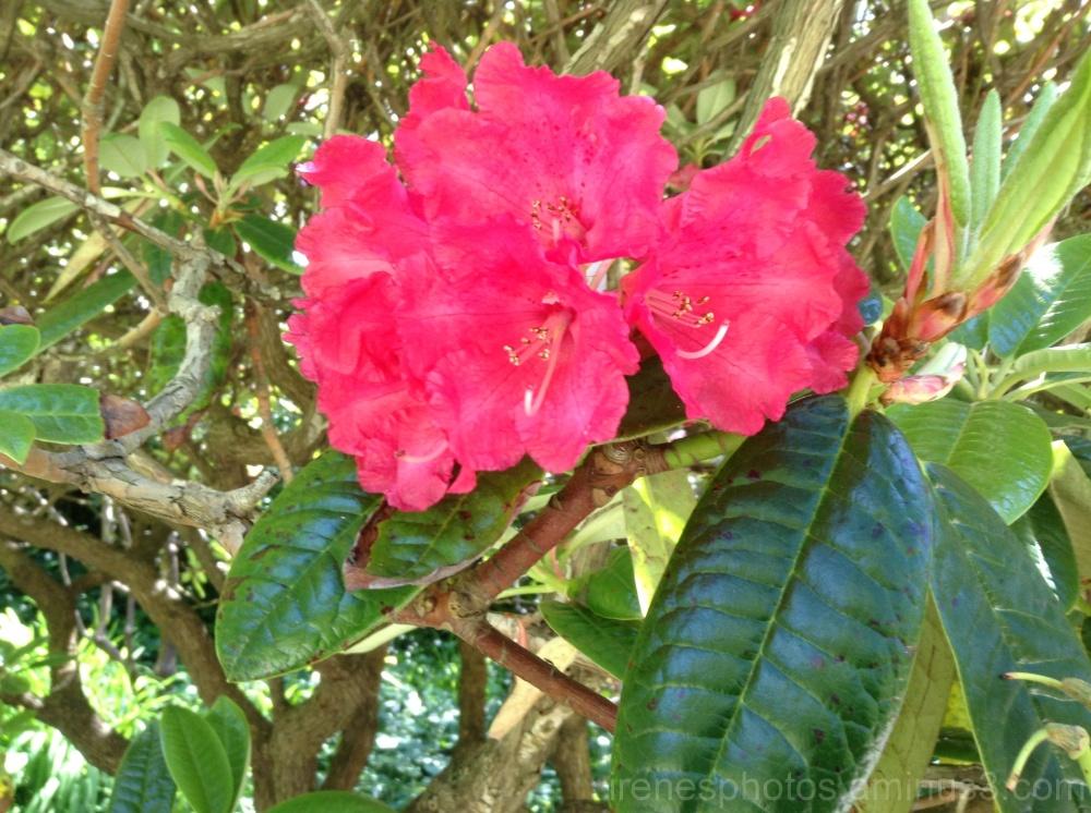 Flower at The Botanical Garden