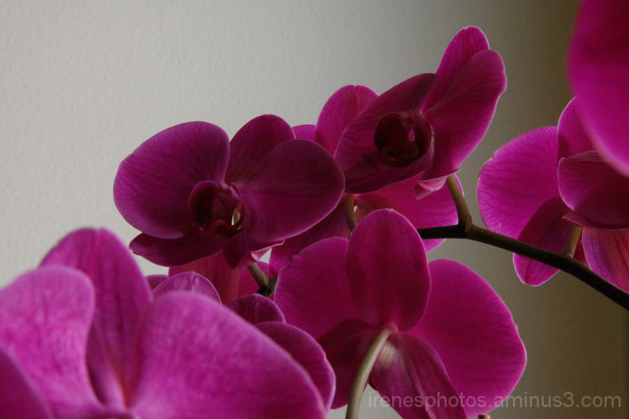 Orchids on Branch