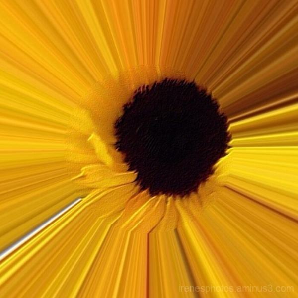 Stretched Sunflower