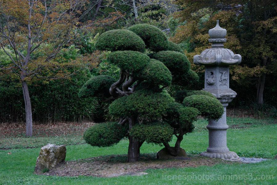 Outside of Japanese Tea Garden