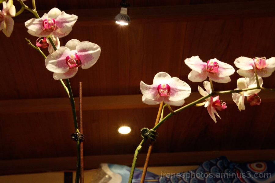 Japanese Tea Garden #5
