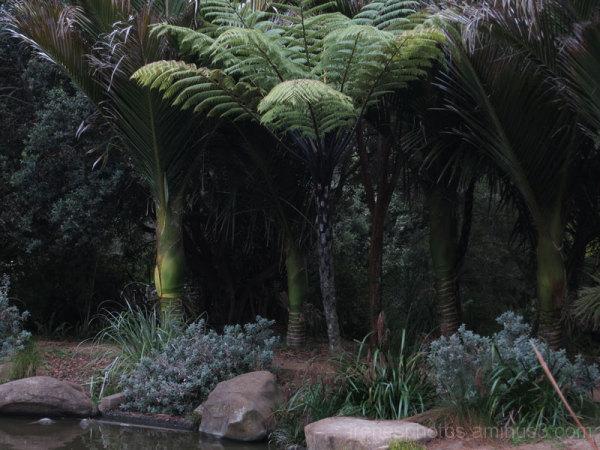 Botanical Garden #3