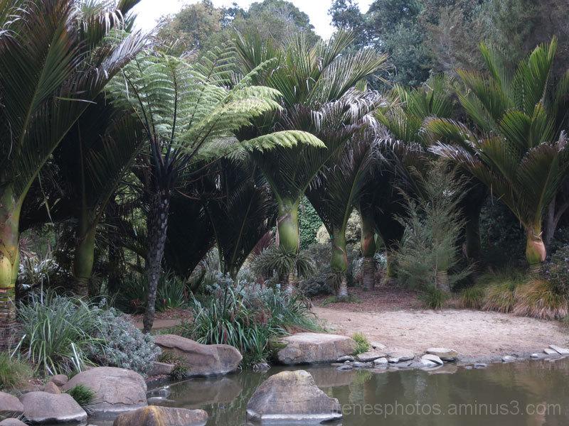 Botanical Garden #5