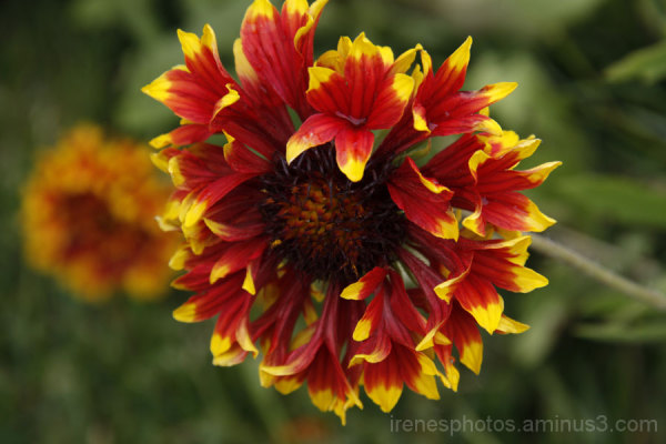 Flowers at Ornamental Horticulture #2