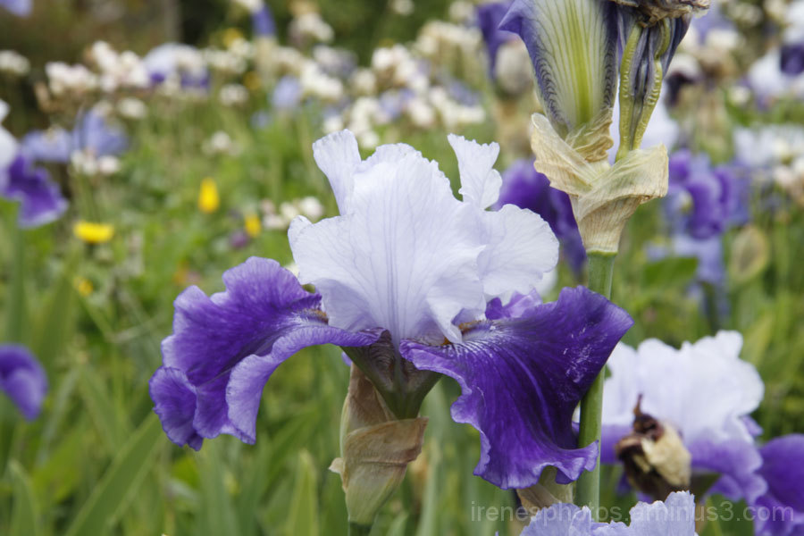 Flowers at Ornamental Horticulture #5