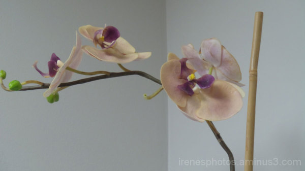 Orchids In Office