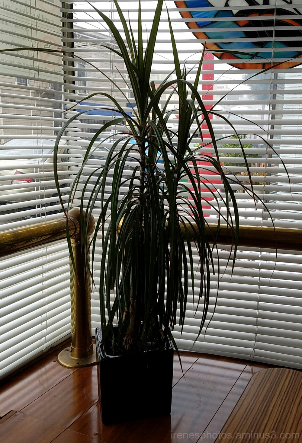 Plant Near Window