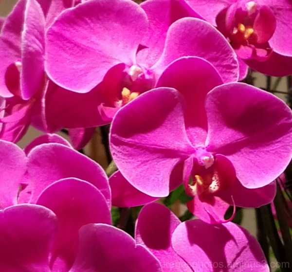 Beautiful Orchids #2