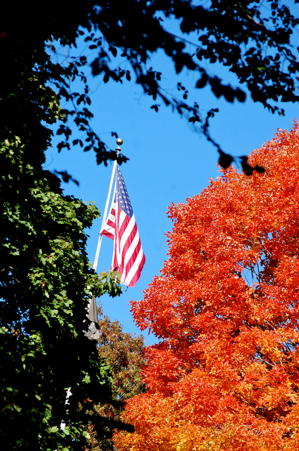 trees and flag