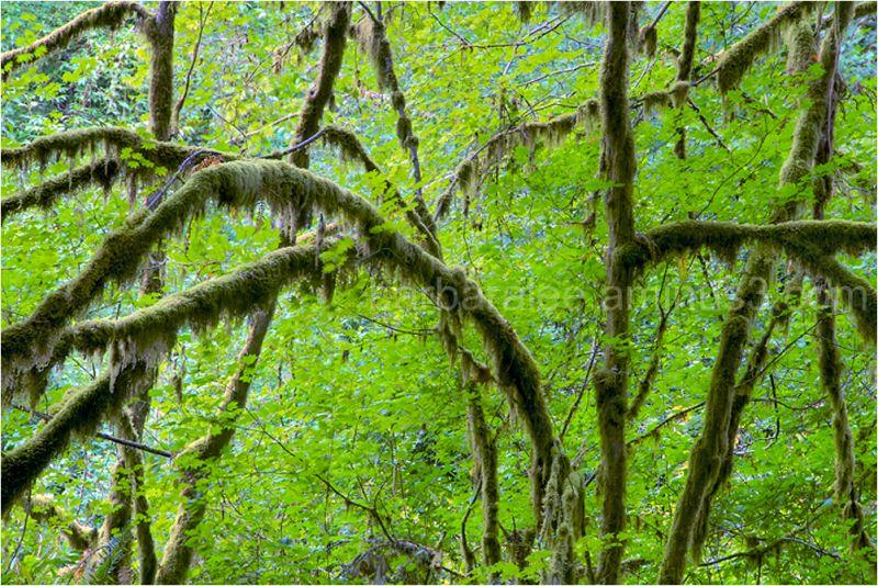 Kennedy Creek Trees