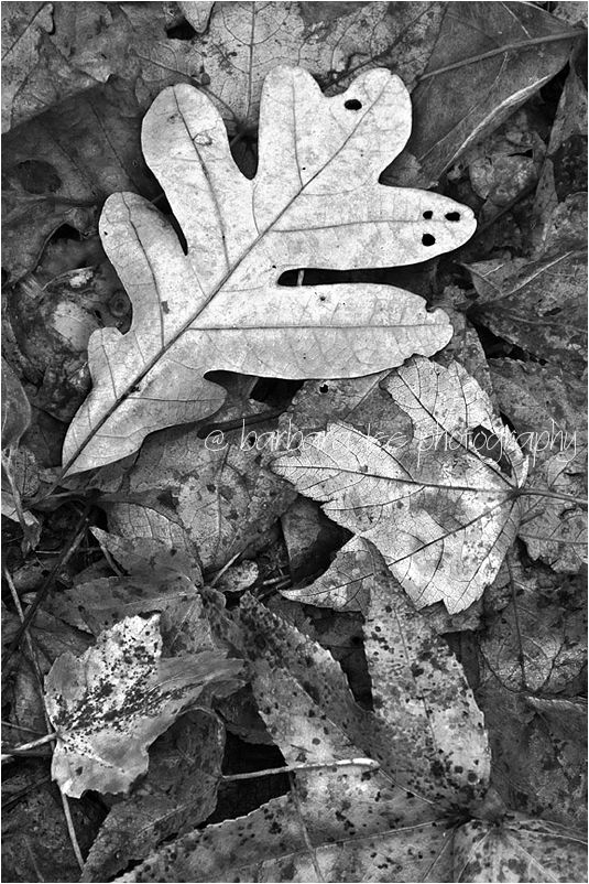 Decaying Leaves on the Forest Floor