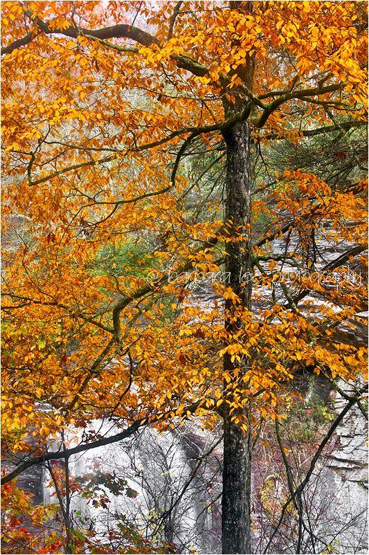 Looking Glass Falls Seen Through Autumn Foliage