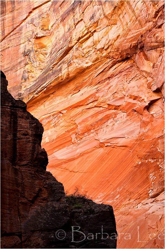 Zion Red Sandstone