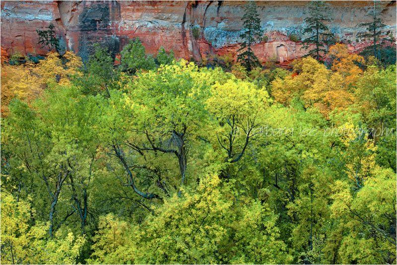 Zion Canyon Autumn Maples