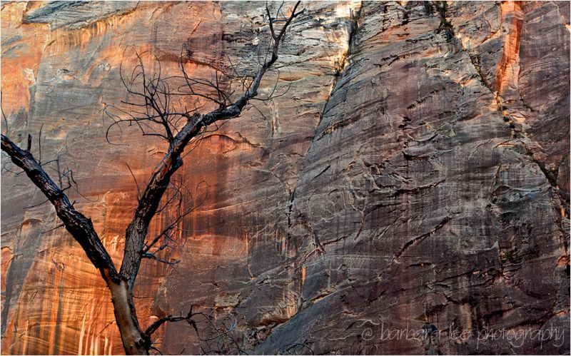 Navajo Sandstone wall in Zion National park