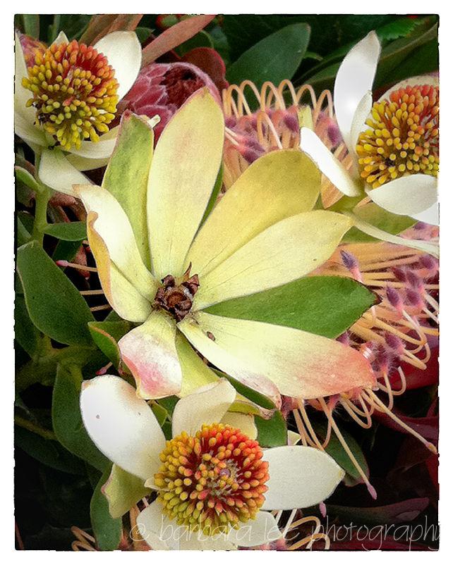protea bouquet