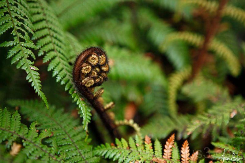 """No, it's not """"All Black"""", but it's NZ fern"""
