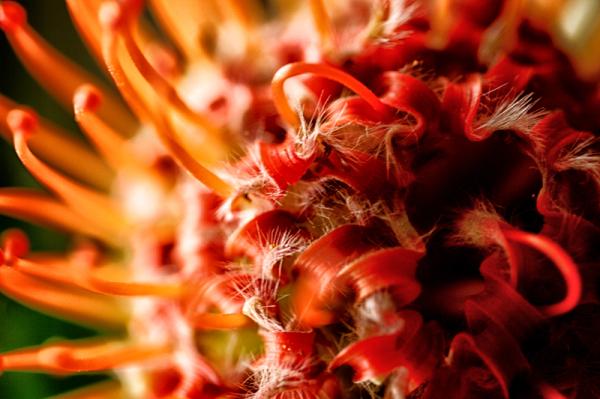 * Flors exòtiques 1