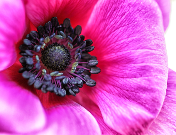 * Flors humanes 7