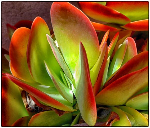 * Vermell i verd a la natura