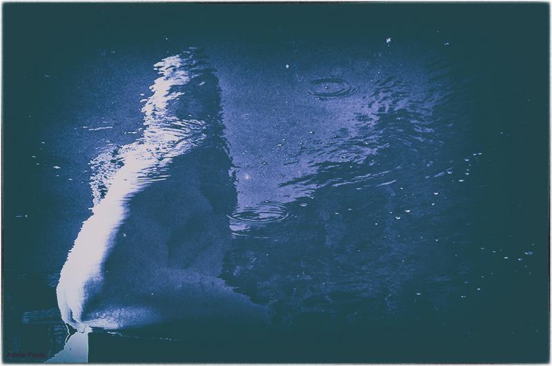 * La Deessa a l'aigua