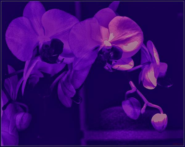 * Flors pintades