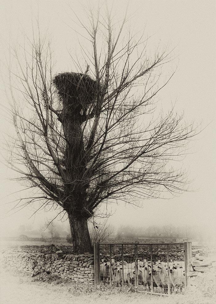 Silencio de invierno ( Winter silence)