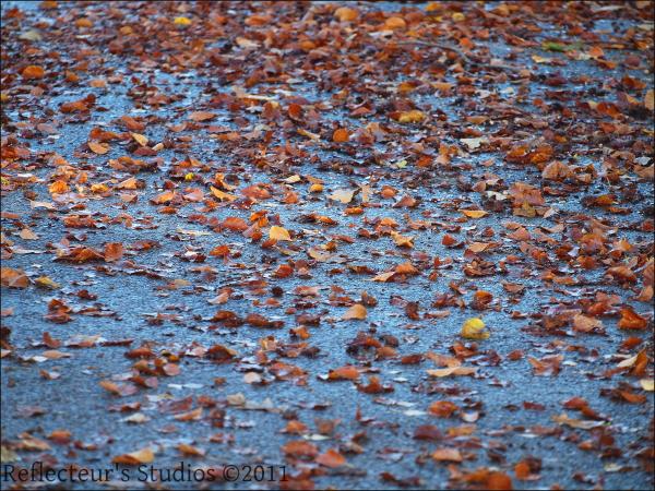 autumn fall sweden nature reflecteurs studios