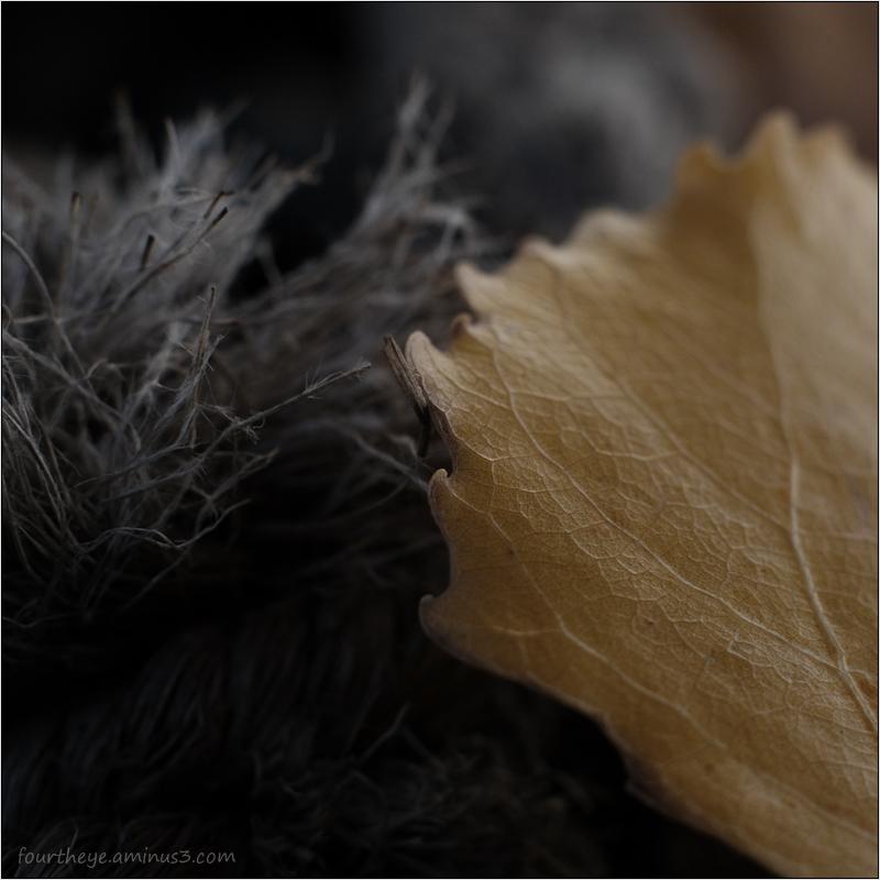 leaf & old rope