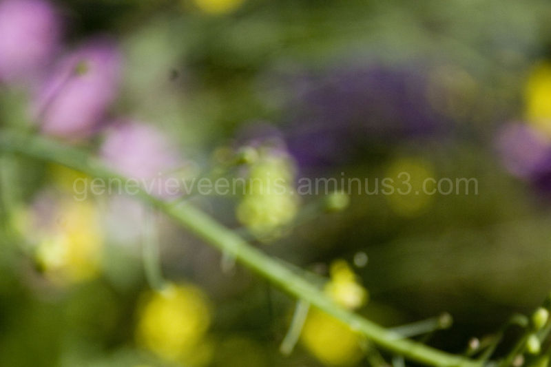 blurred flowers