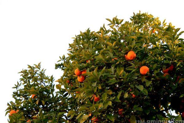 چرا باغچه کوچک ما سیب نداشت؟