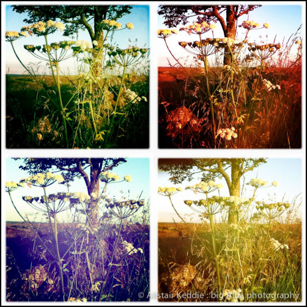 Hipstamatic Landscapes : Cow Parsley