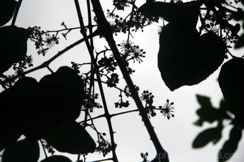 Silhouette of some random plants.