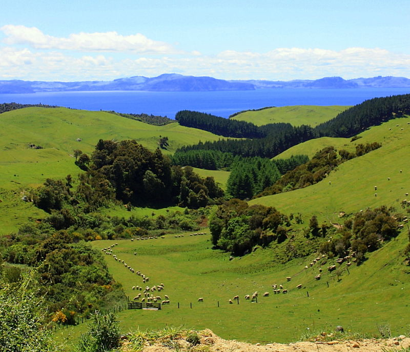 Lake Taupo view