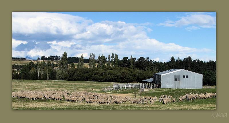 #6 Otago
