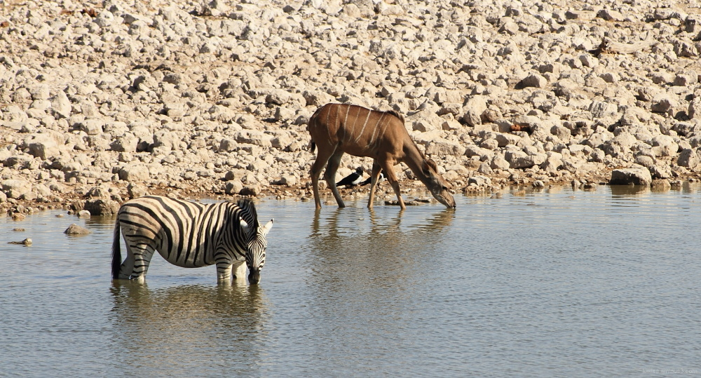 Kudu and Zebra at Oukaukuejo waterhole