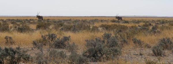 #2 Drive through Etosha National Park