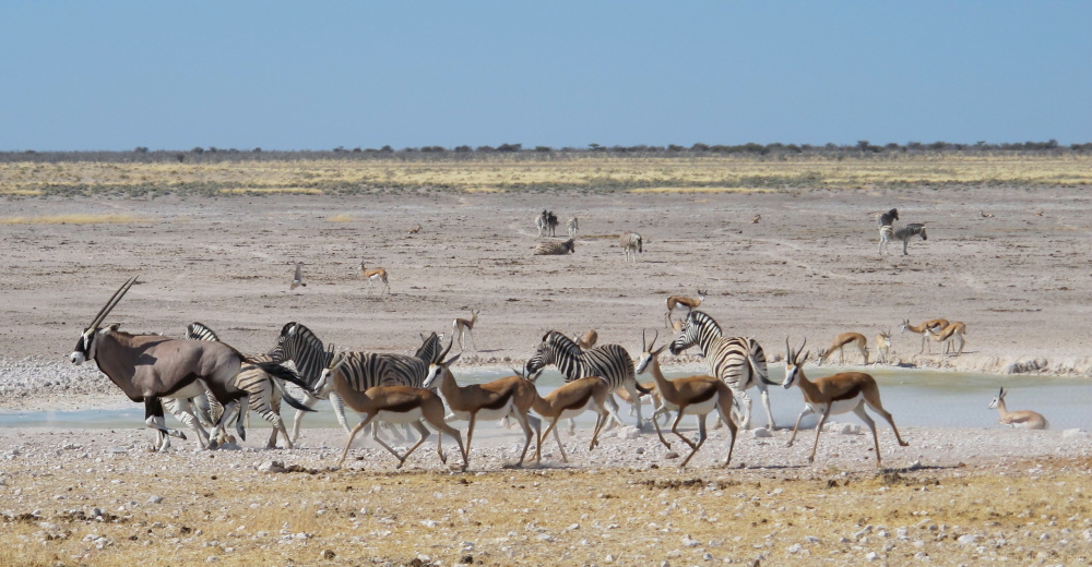 #5 Driving through Etosha National Park