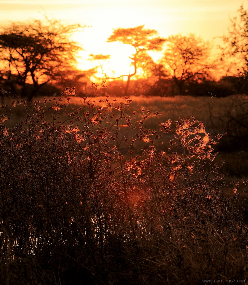 #5 Onguma: spiderwebs at sunset