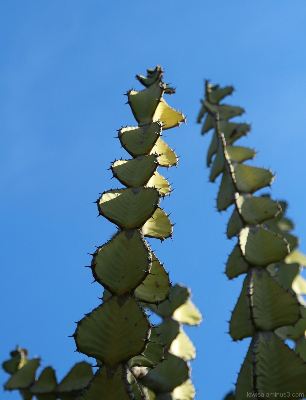 #5 Kirstenbosch