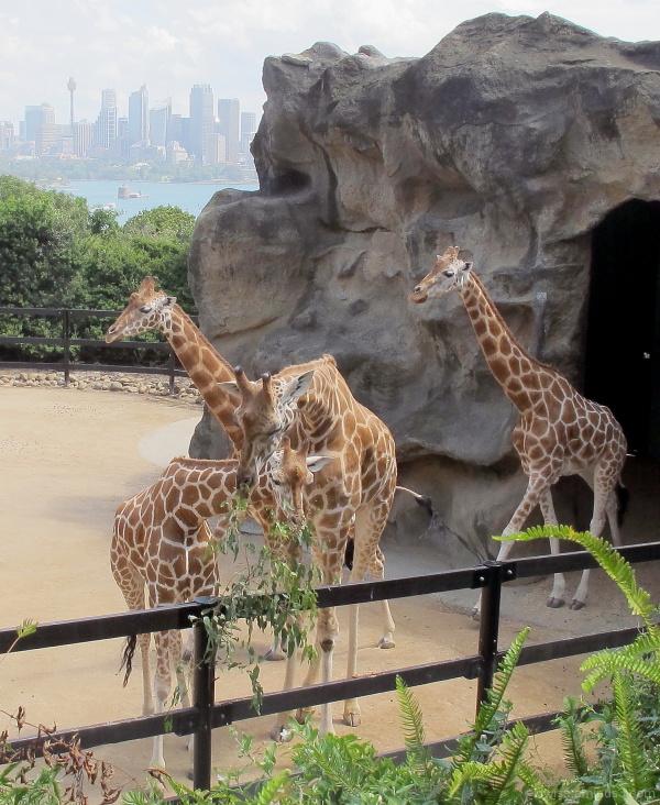 #4 Taronga Zoo, Sydney